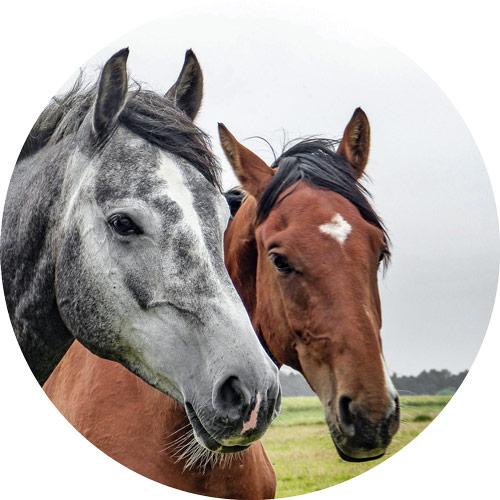 horses-1414889_1920-circle.jpg