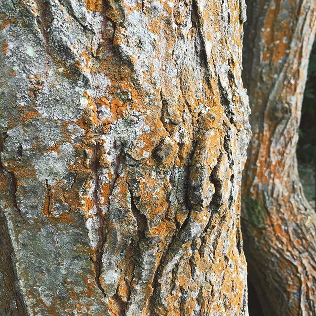 Nature always has the best colour combinations and textures. Feeling inspired by our maker-the master in surface pattern design! #treebark #beautifultextures #texture #lichen #tree #naturepatterns #patternsinnature #tree #colours #naturecolours #lovethiscolour