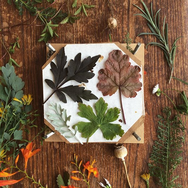 I couldn't bear to throw away all these pretty leaves and flowers I'd gathered for photos so decided to press them! I'm looking forward to seeing how they turn out and doing something with them! Has anyone got any pressed flower crafts they like doing?  #pressedflowers #leaves #flowerpress #naturecrafts #garden #leaves #foliage #pressingflowers #pressedflowerart #pressedflowercrafts #leafcollection #collectingleaves #tooprettytotoss #naturelovers