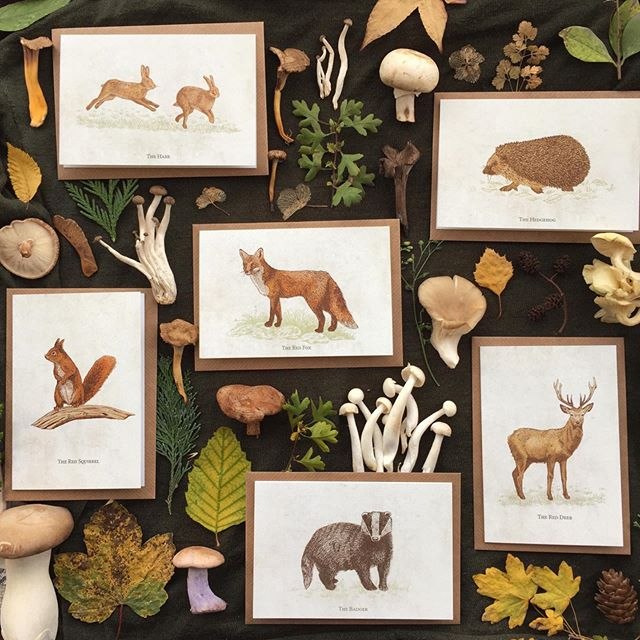 Here's the full collection of cards you get inside the wild animal card packs! Surrounded by the yummy mushrooms I got from the market a while back (which I never did get to eat as I spent too long drawing them! 🙈) Follow link in bio to shop now 🦌🦡🦔 #mushrooms #wildanimals #britishwildlife #fox #stag #reddeer #redsquirrel #hares #jumpinghare #hedgehog #badger #leaves #flatlay  #woodlandanimals #natureillustration #animalillustration #cards #greetingcards #notecards #handmadeparade #makersgonnamake #heytheremaker #illustration #natureillustration