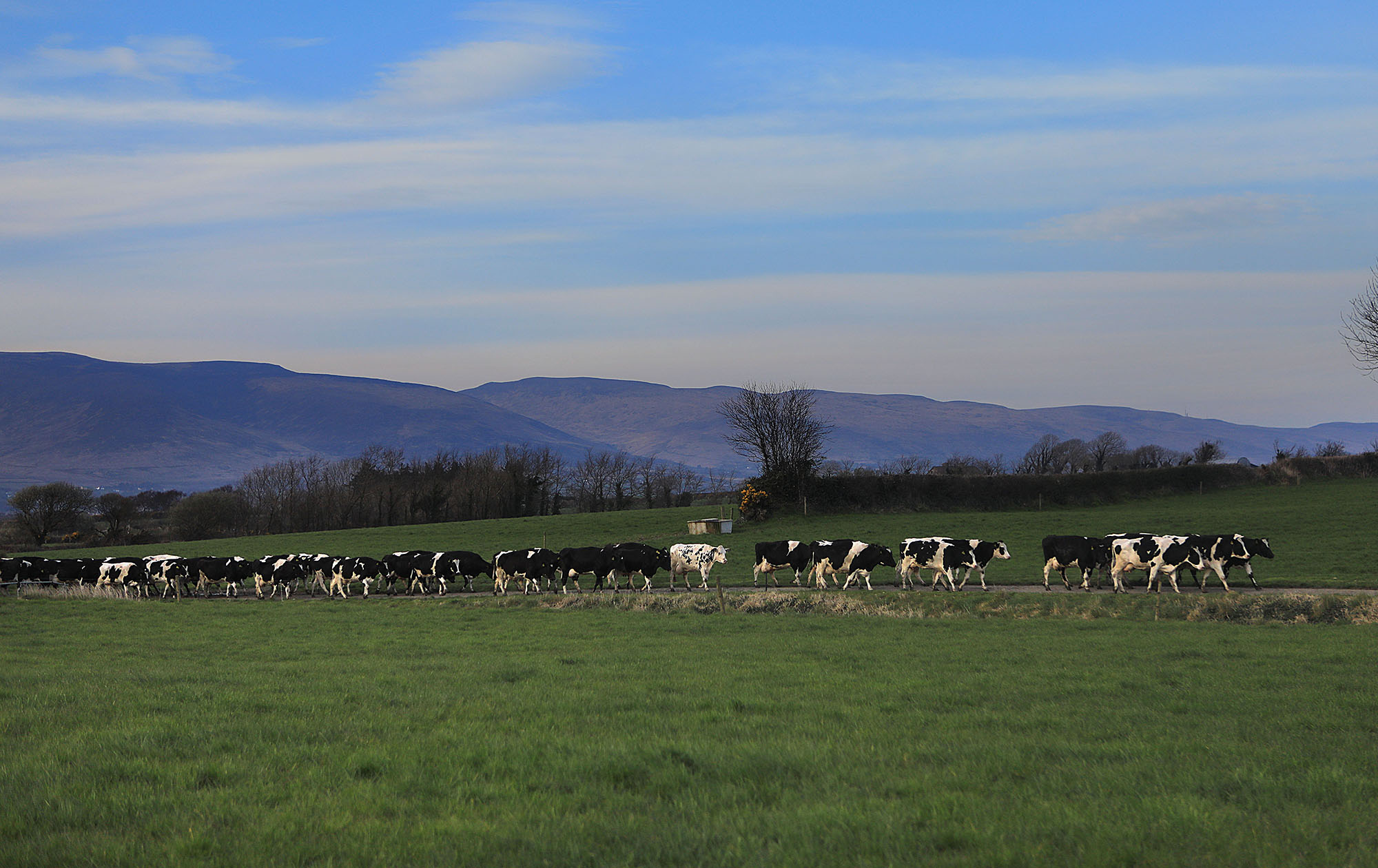 Welcome to   Kerry Agribusiness