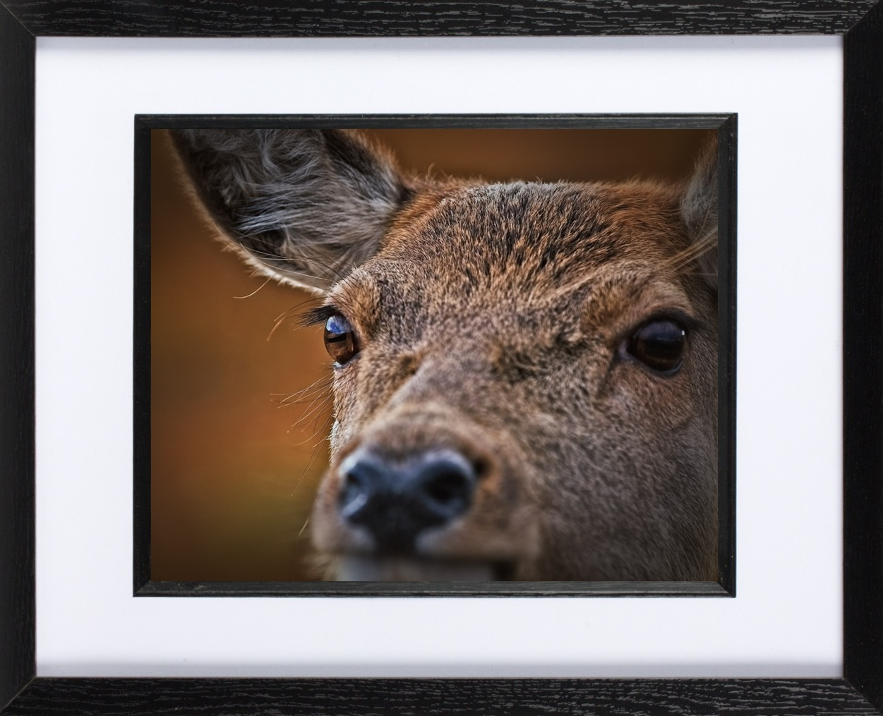 'My very own Bambi' - I saw this image of a young deer at Jim's exhibition last year. When he put it up for sale a few weeks ago I had to have it. The emotion he captures is just brilliant. This is now the picture I see when I walk into my living room.Carol Leatherbarrow, Leith.
