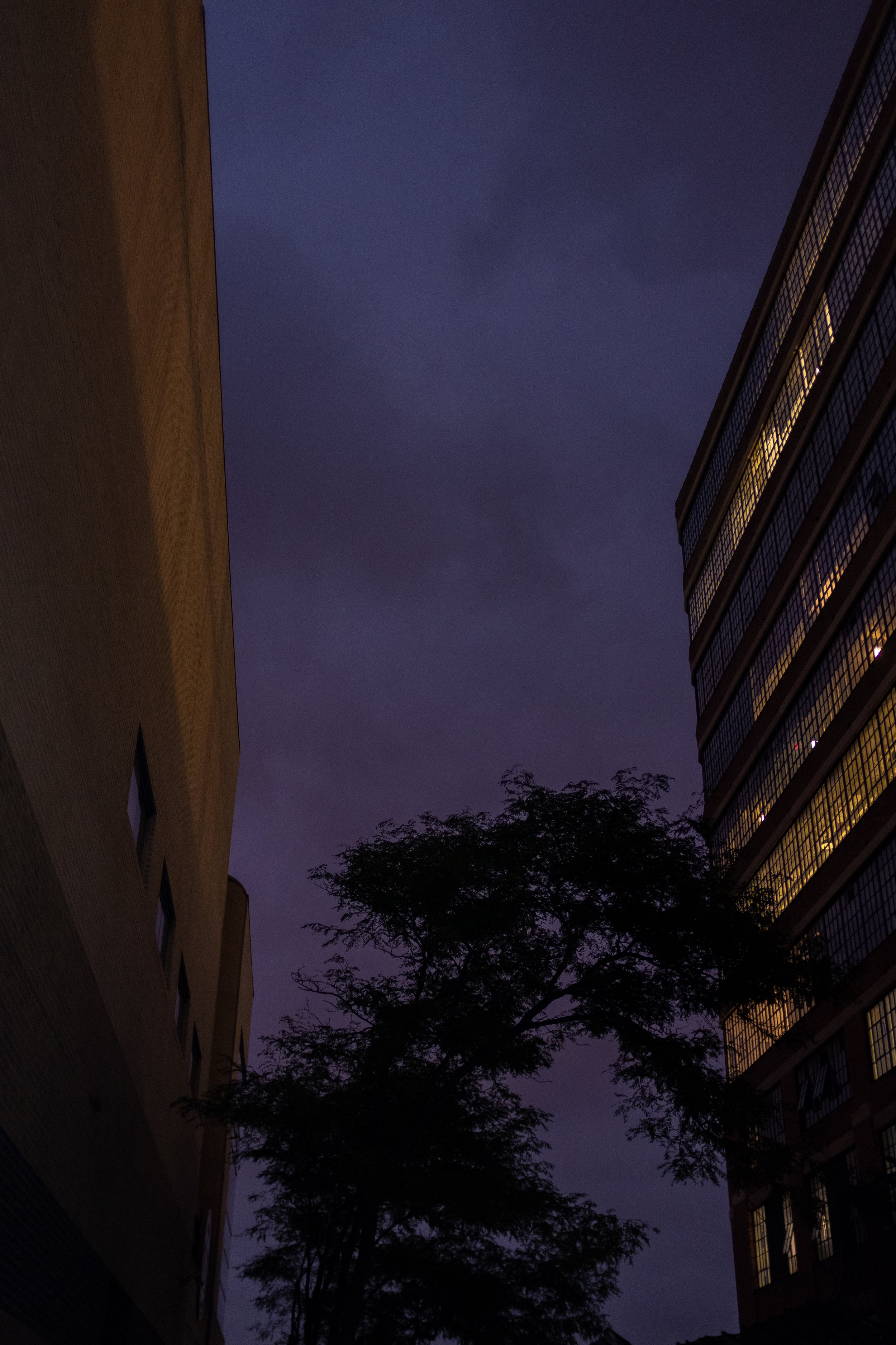 The Sky, buildings and a Tree