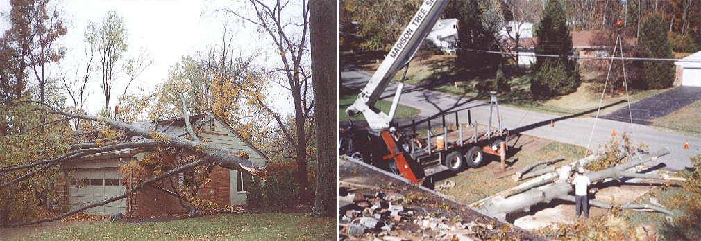 Storm Damage Clean Up - Before & After