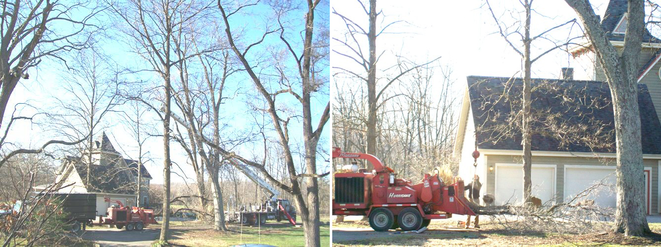 Crane Tree Removal - Before & After
