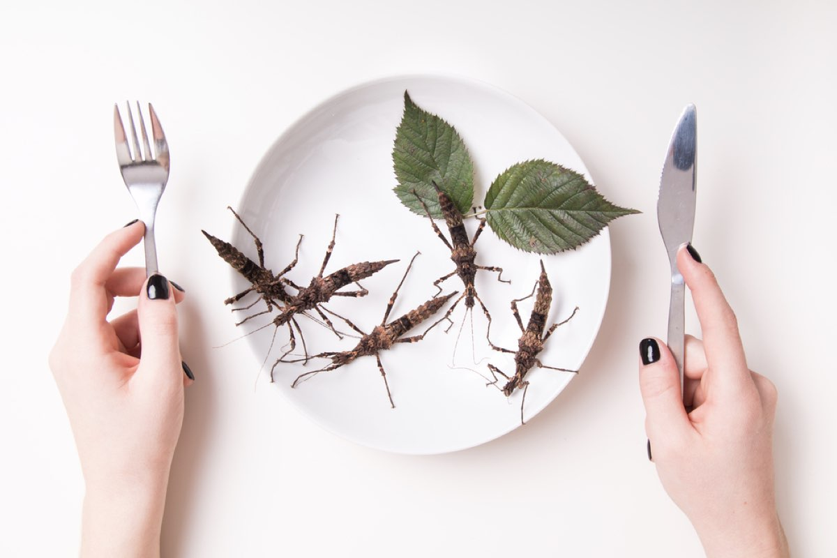 Whatever Your Dose: Insects- The Food Of The Future?
