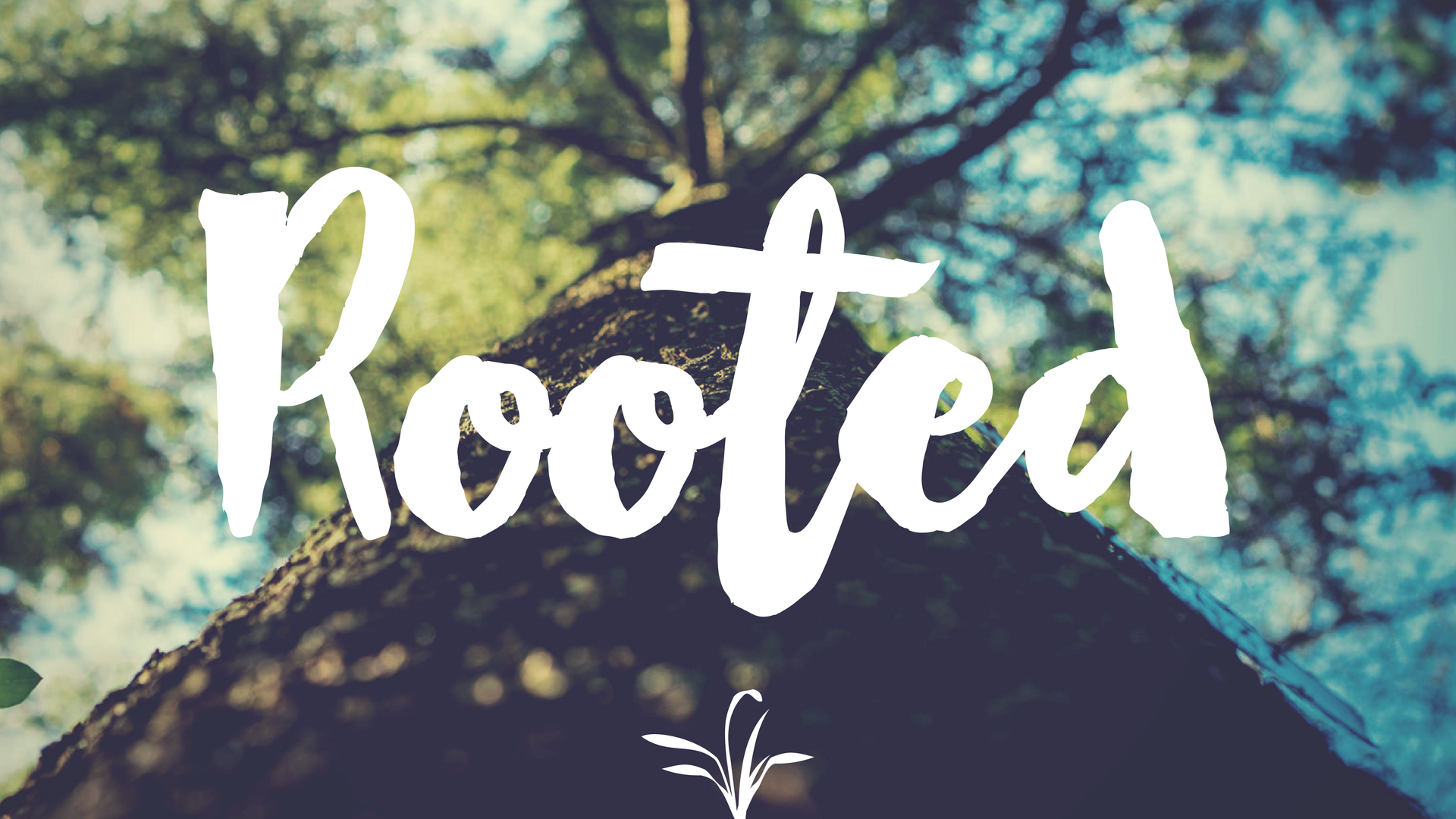rooted 6 (1).png