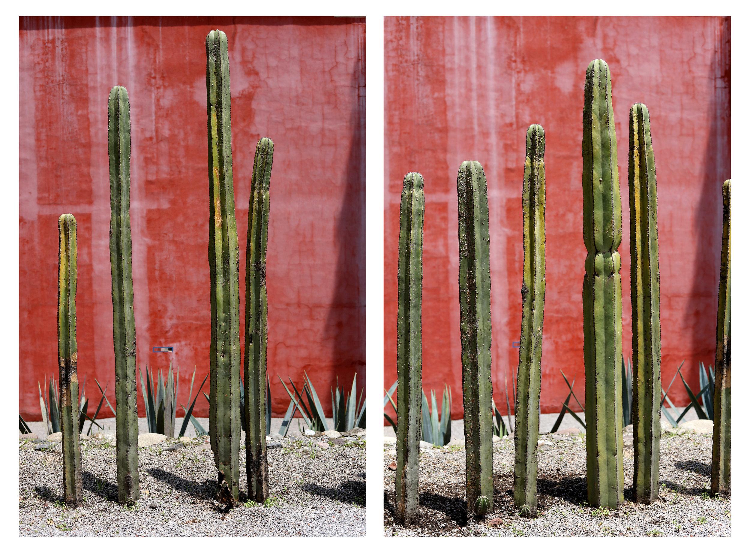 Cacti_Diptych.jpg