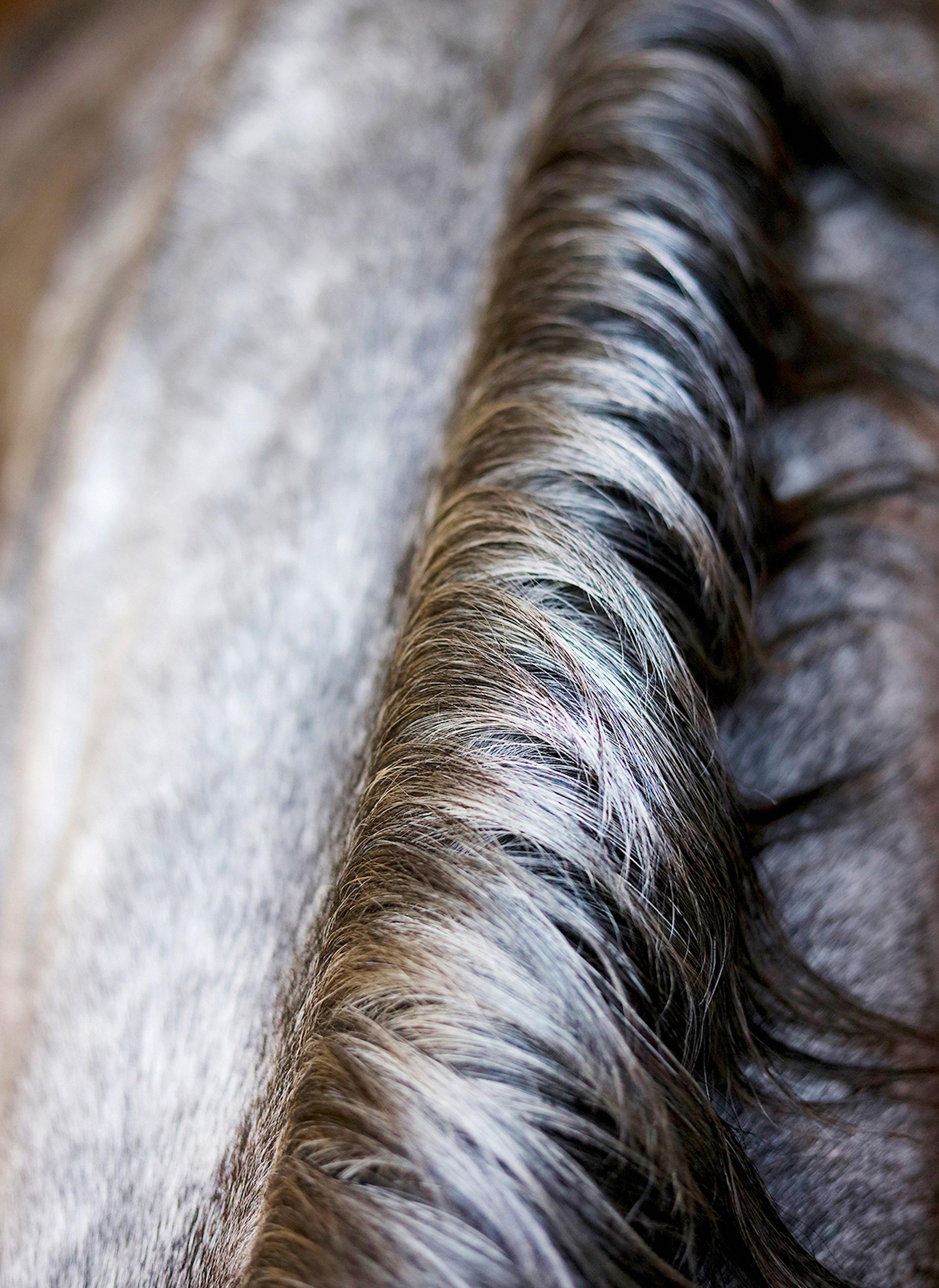HorseMane_1 1.jpg