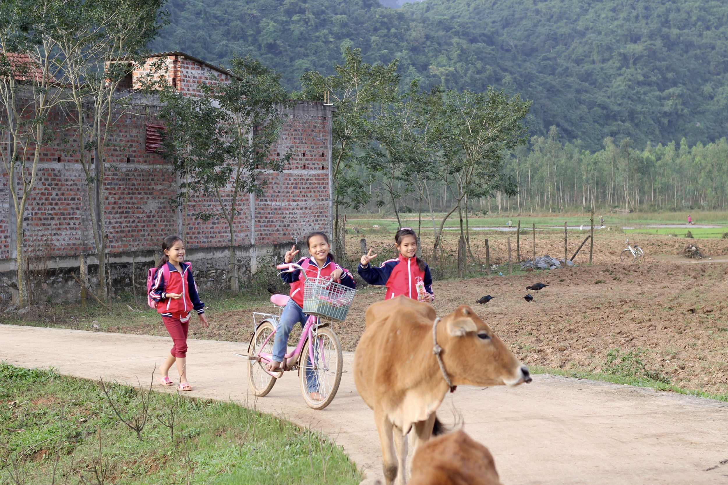 Three girls returning home from school in Central Vietnam, near Phong Nha National Park.