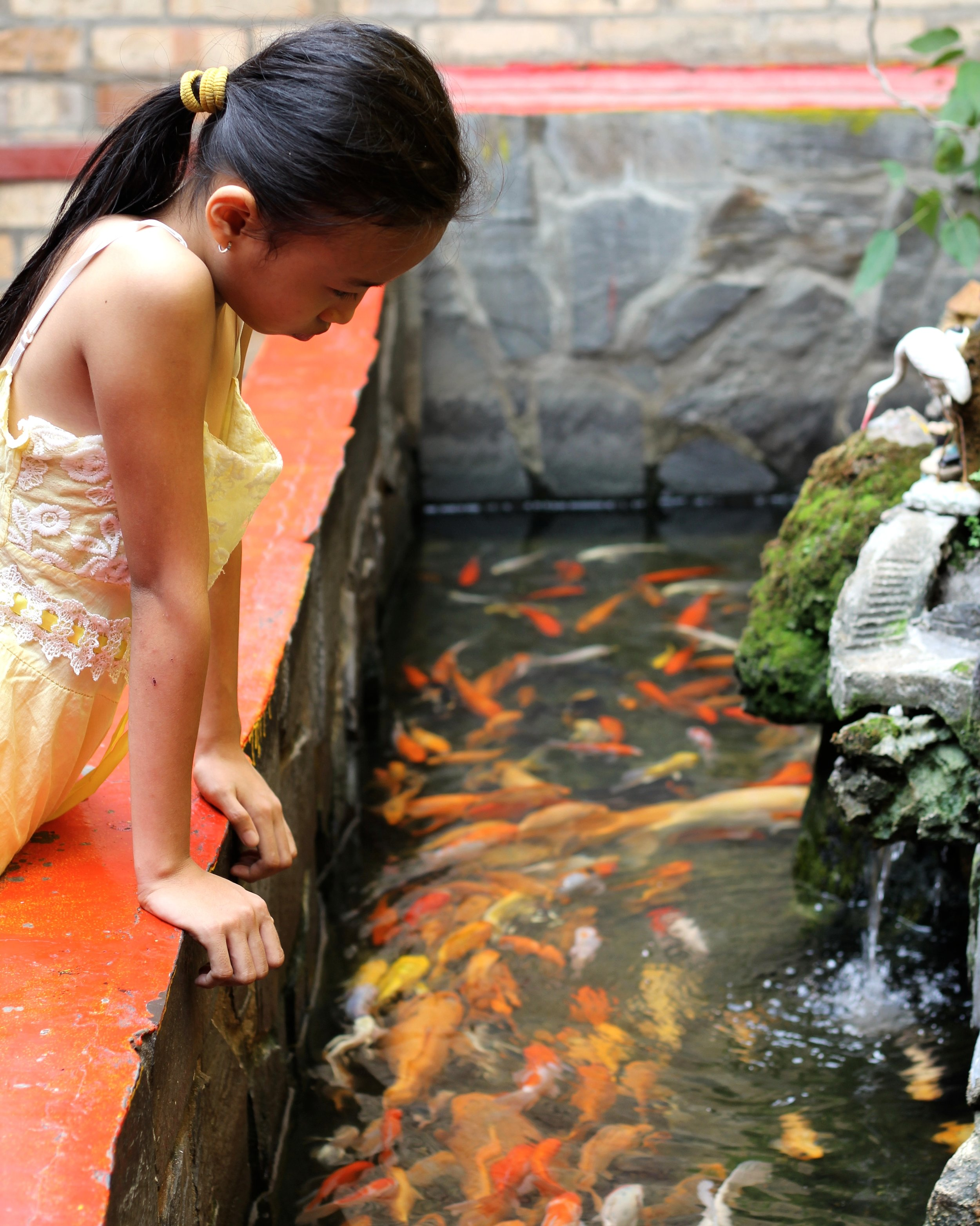 A girl peacefully observing the Koi fish in a pagoda pond in Ho Chi Minh City.