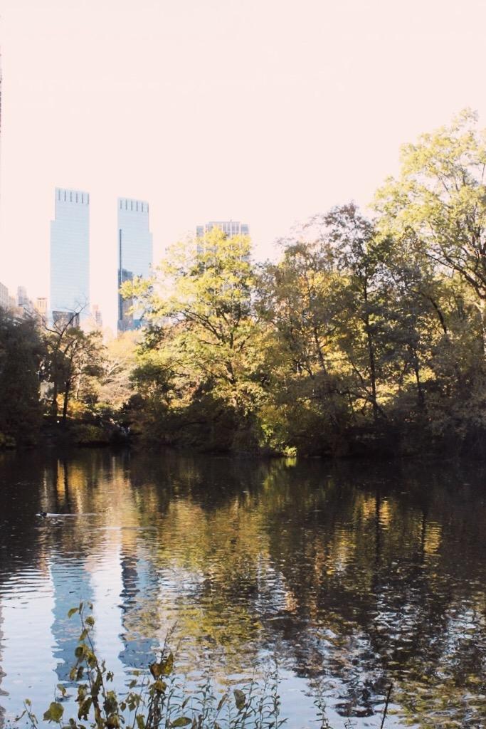 fizz-fade-central-park-fall5.JPG