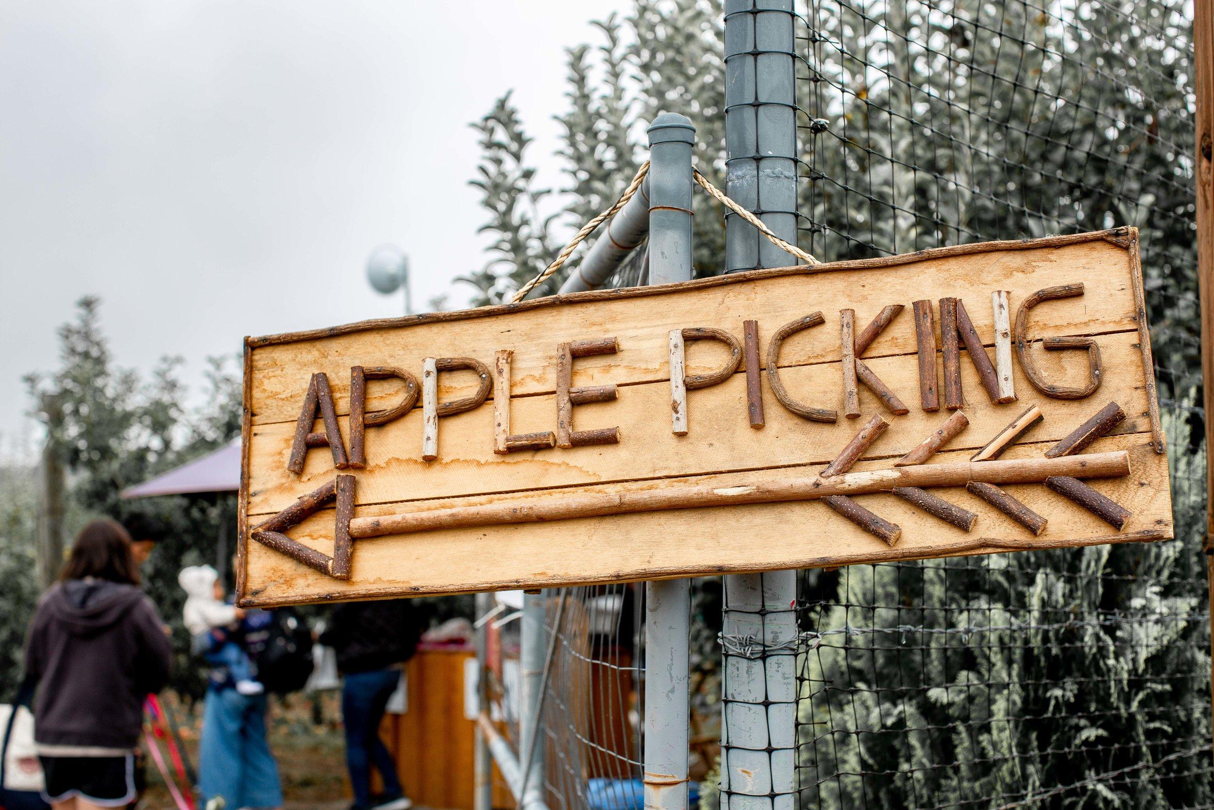 fizz-fade-apple-picking-11.jpg