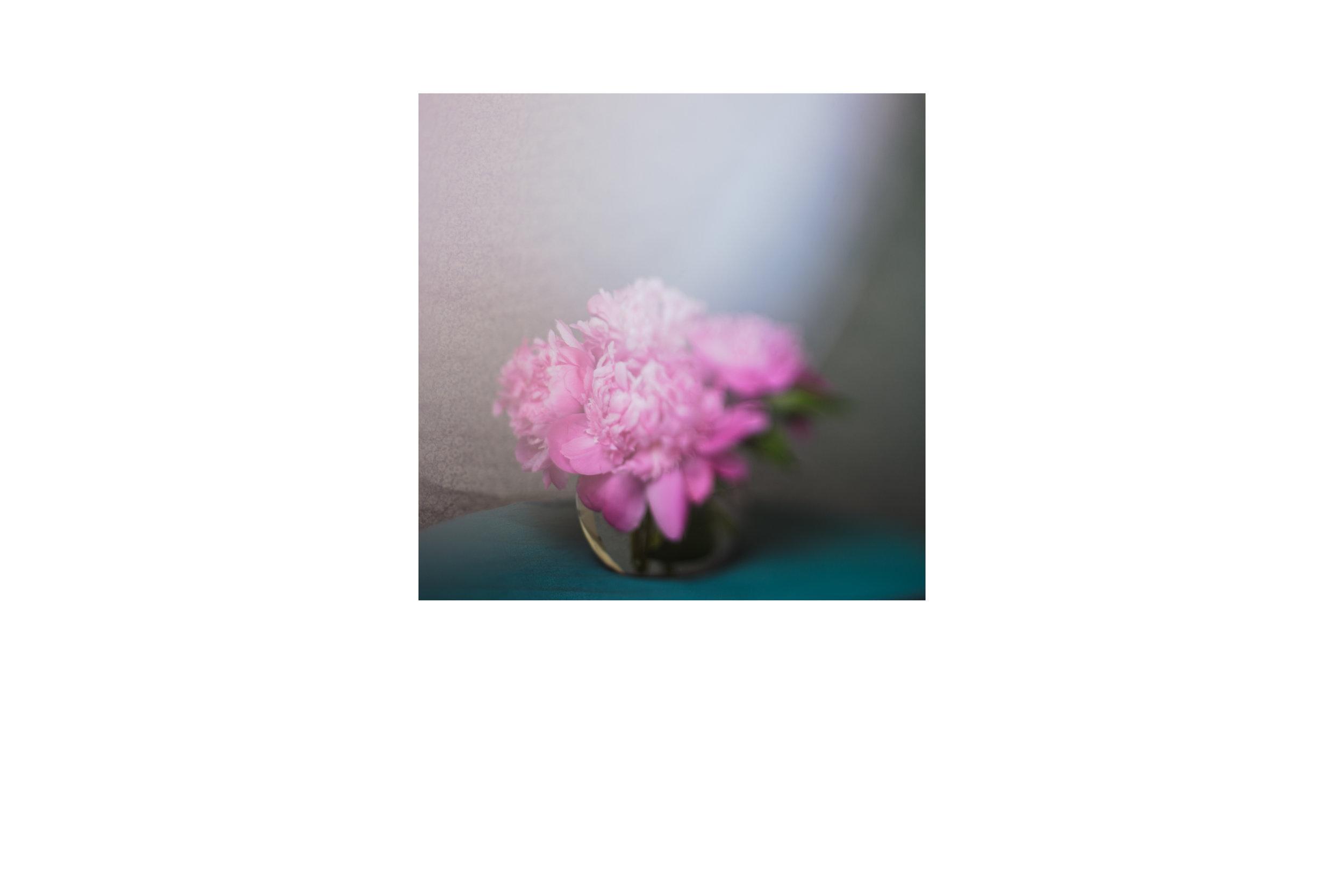 pinkflowerstilllife.jpg