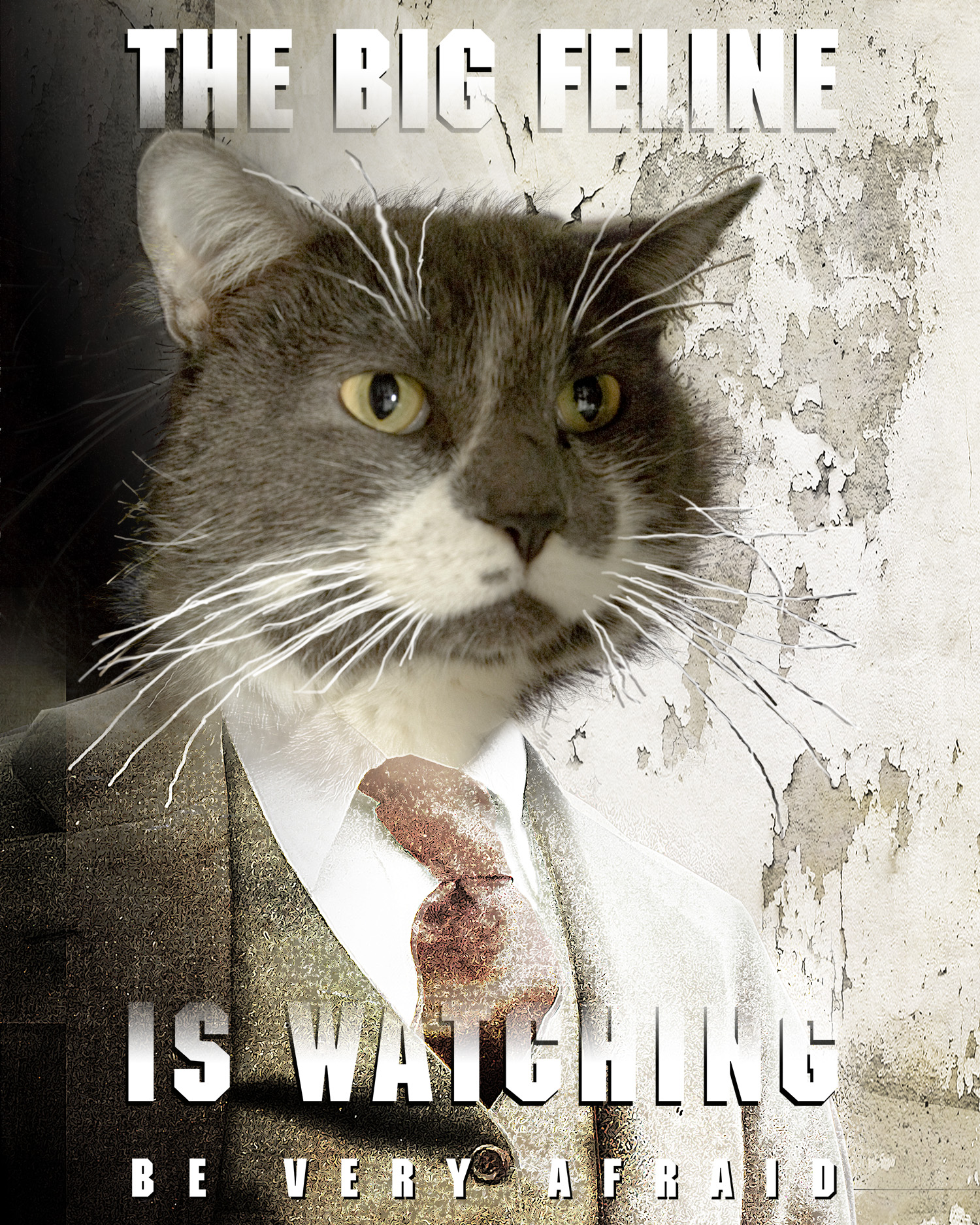 The Big Feline is Watching