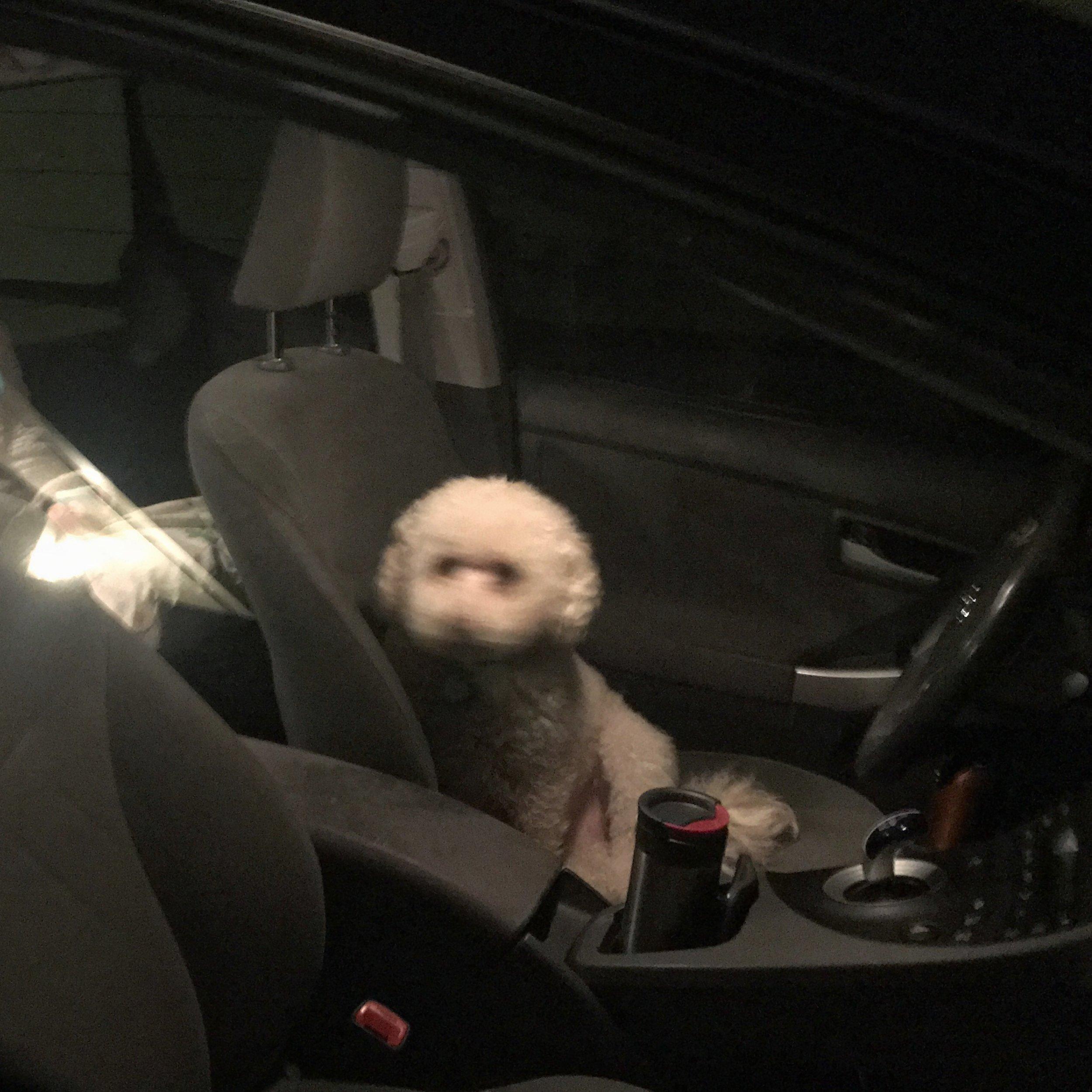 Fuzzy Dog is my Co-Pilot