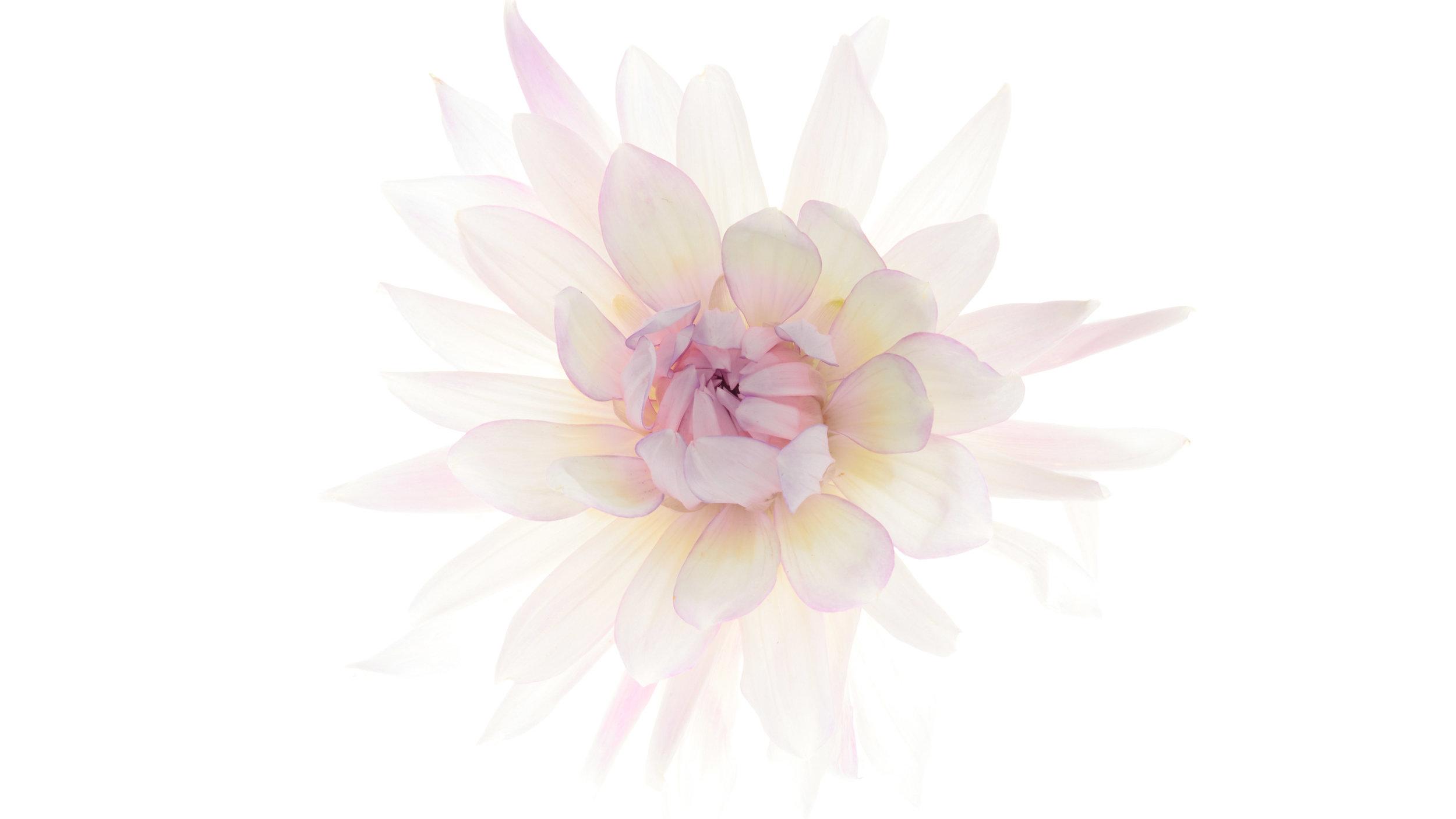 Bion_Flowers.jpg