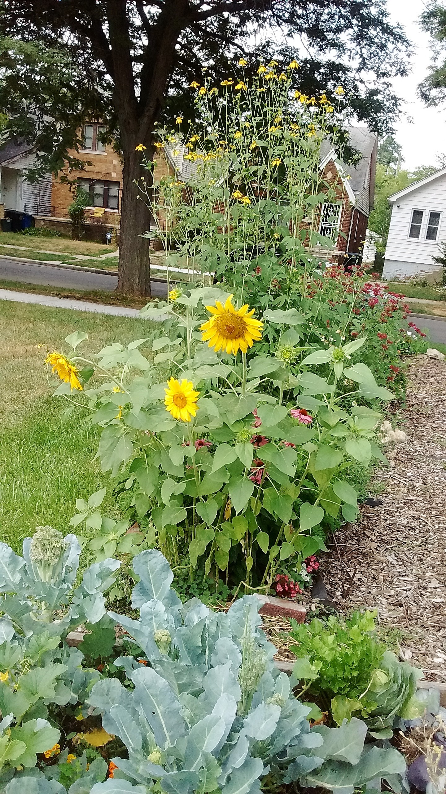 The Manistique Community Garden