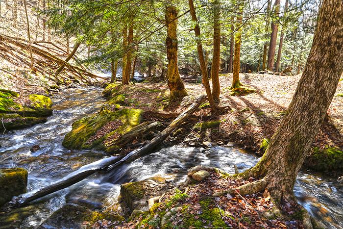 morrison-trail-allegheny-national.jpg