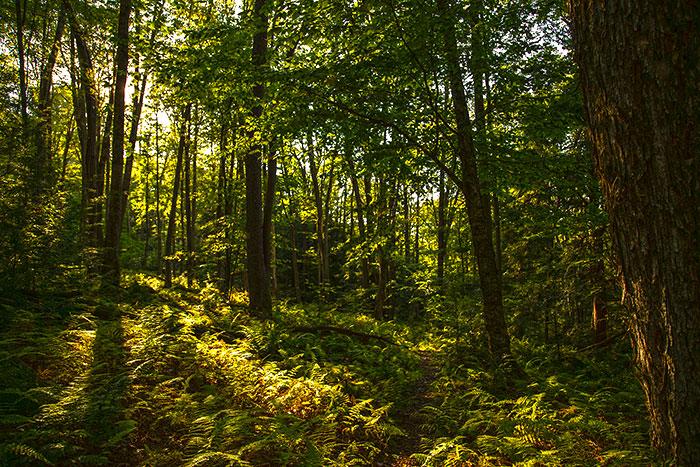 tanbark-trail-allegheny-national-forest.jpg