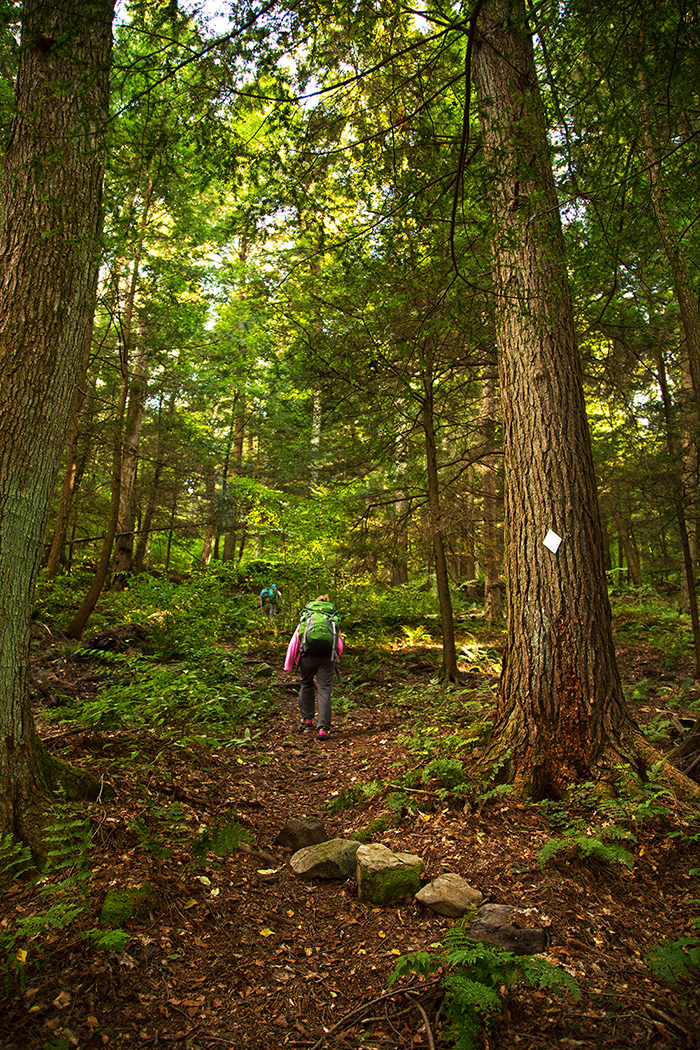 tanbark-trail-climb.jpg