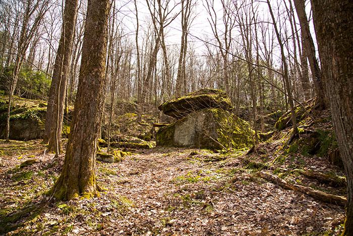 tanbark-trail-rocks.jpg