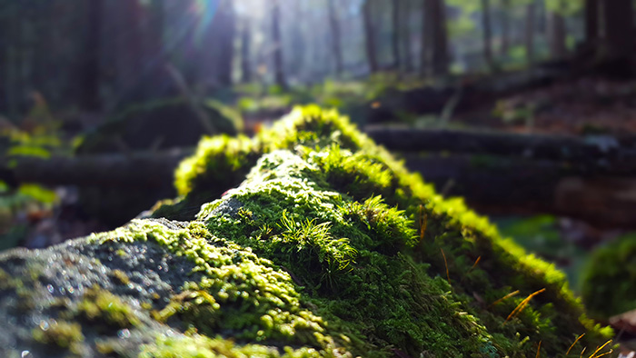 tanbark-winter-green.jpg