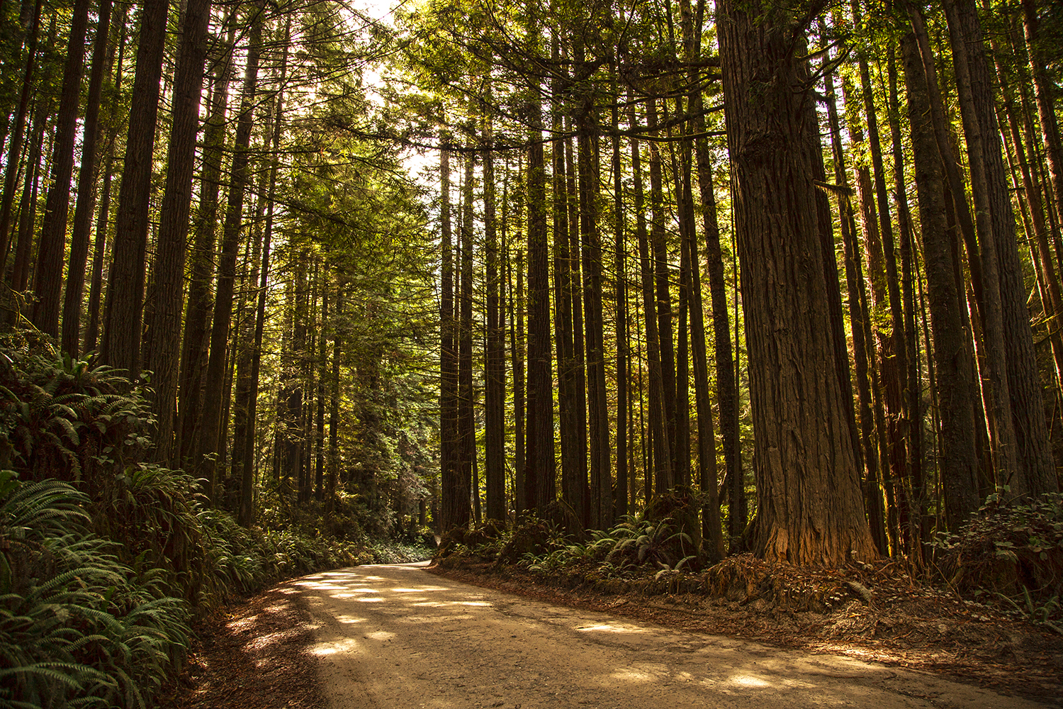 Camping at Redwoods National Park