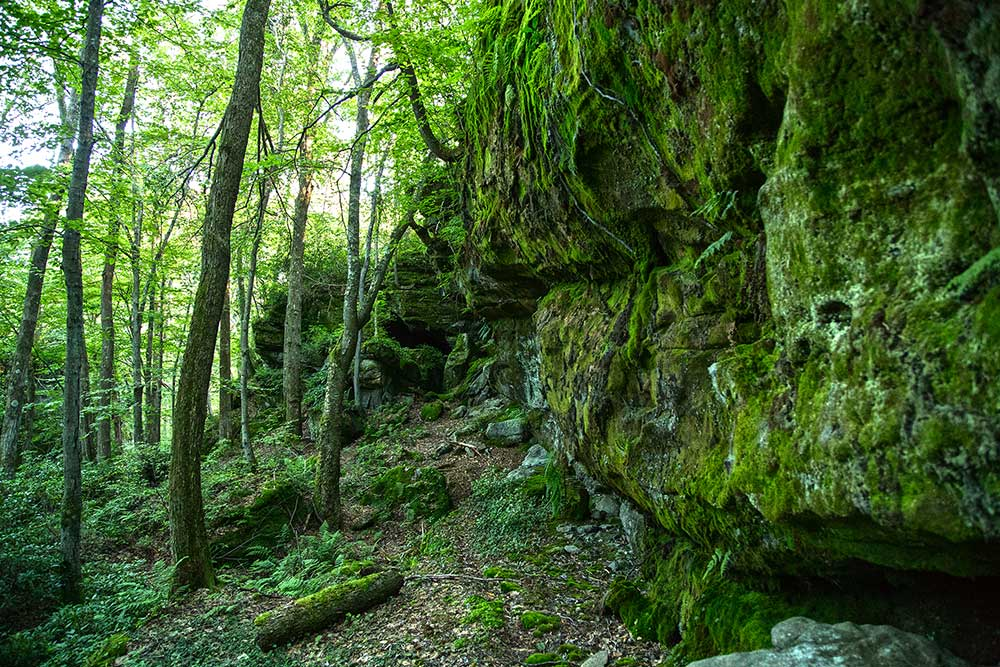 Rock Outcropping - Tanbark Trail - Allegheny National Forest
