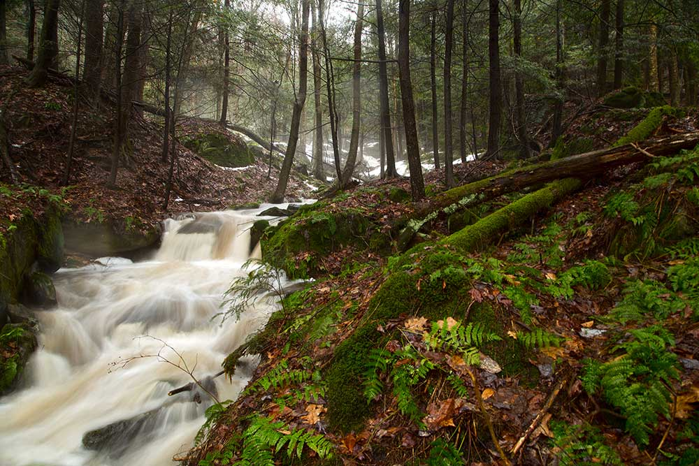 Boardinghouse Run - Tanbark Trail - Allegheny National Forest