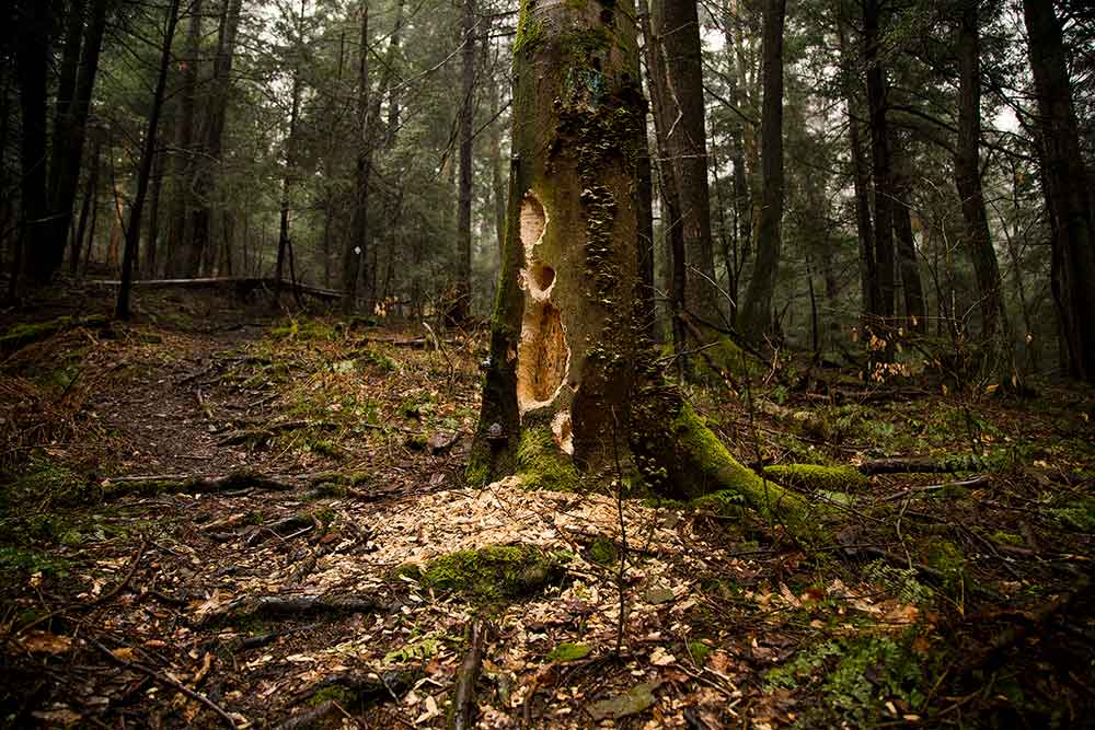 Hiking Tanbark Trail - Allegheny National Forest