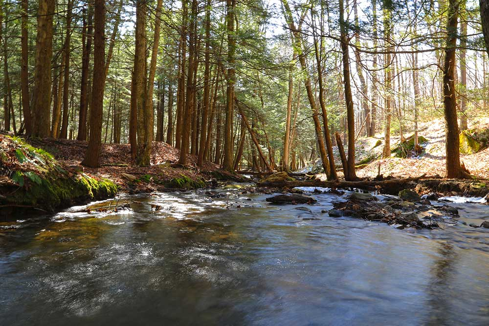 Morrison Trail in the Allegheny National Forest