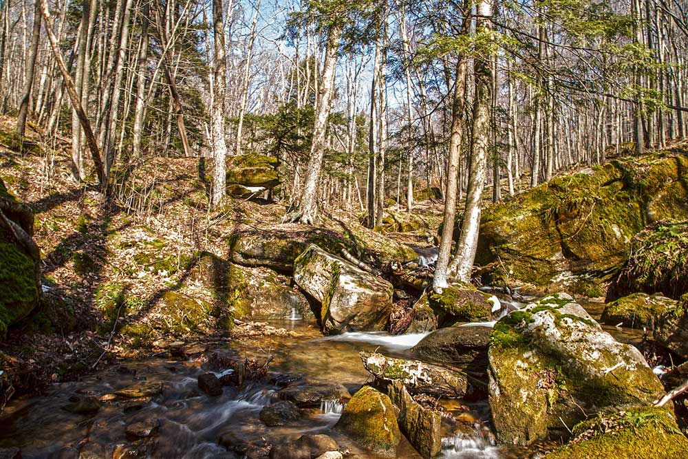 Morrison Run in the Allegheny National Forest