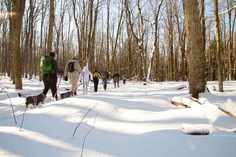 Snowshoe hike on Morrison Trail