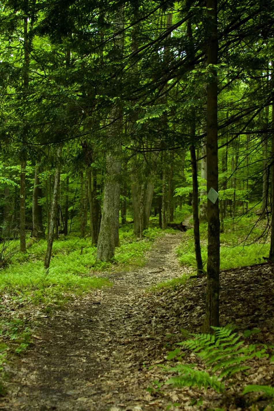 Morrison loop trail in the Allegheny National Forest