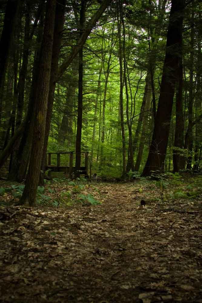 Anders Run Natural Area