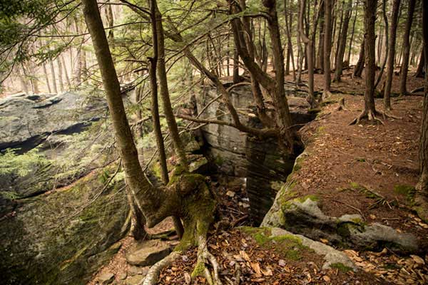 Hector Falls in the Allegheny National Forest