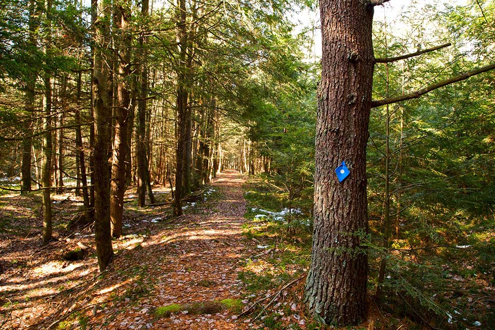 Tom's Run trail in the Allegheny National Forest