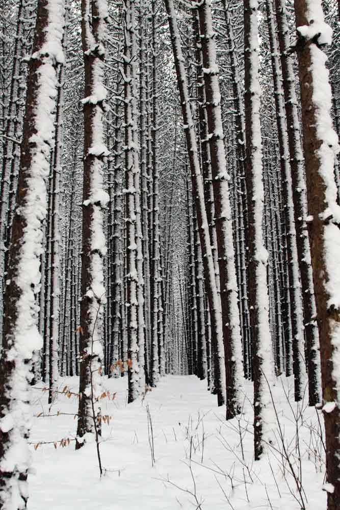 Tom's Run trail cross-country skiing and hiking trail in the Allegheny National Forest