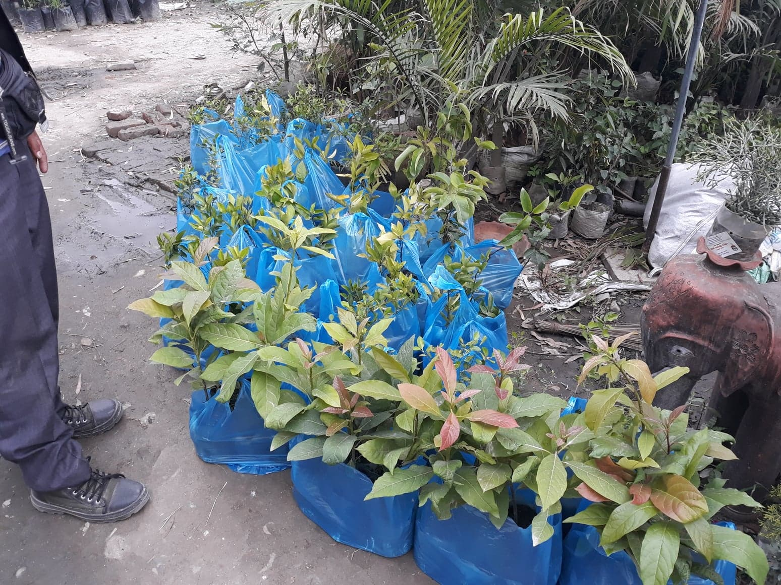 - Plants waiting to be collected