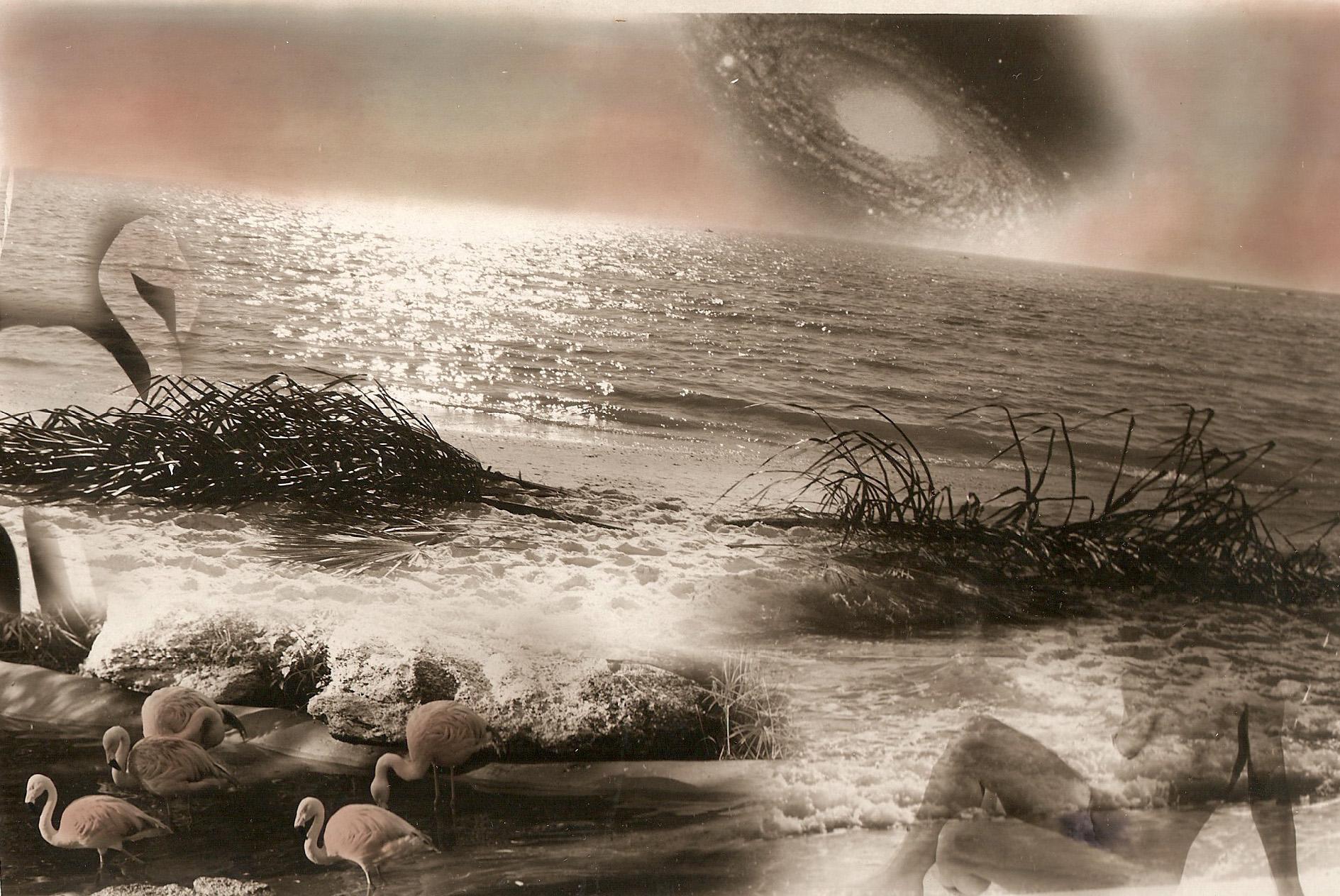 Star Consulation The Sea & Figure Flamingo 5x7 in 300 dpi.jpg
