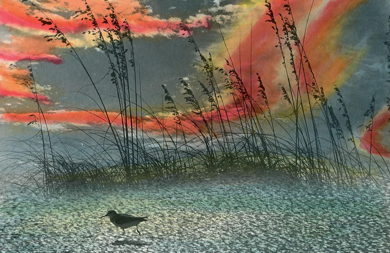 "Bird Running Treasure Island, Fl. 16"" x 20"" and 5"" x 7"""