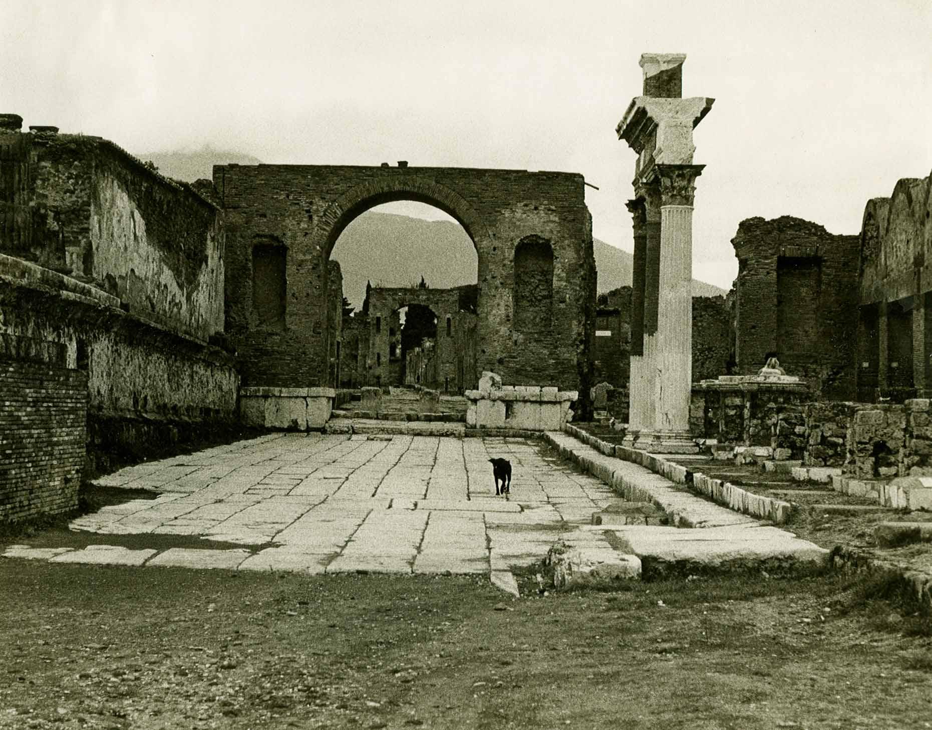Dog Walking in Pompei Italy lr.jpg
