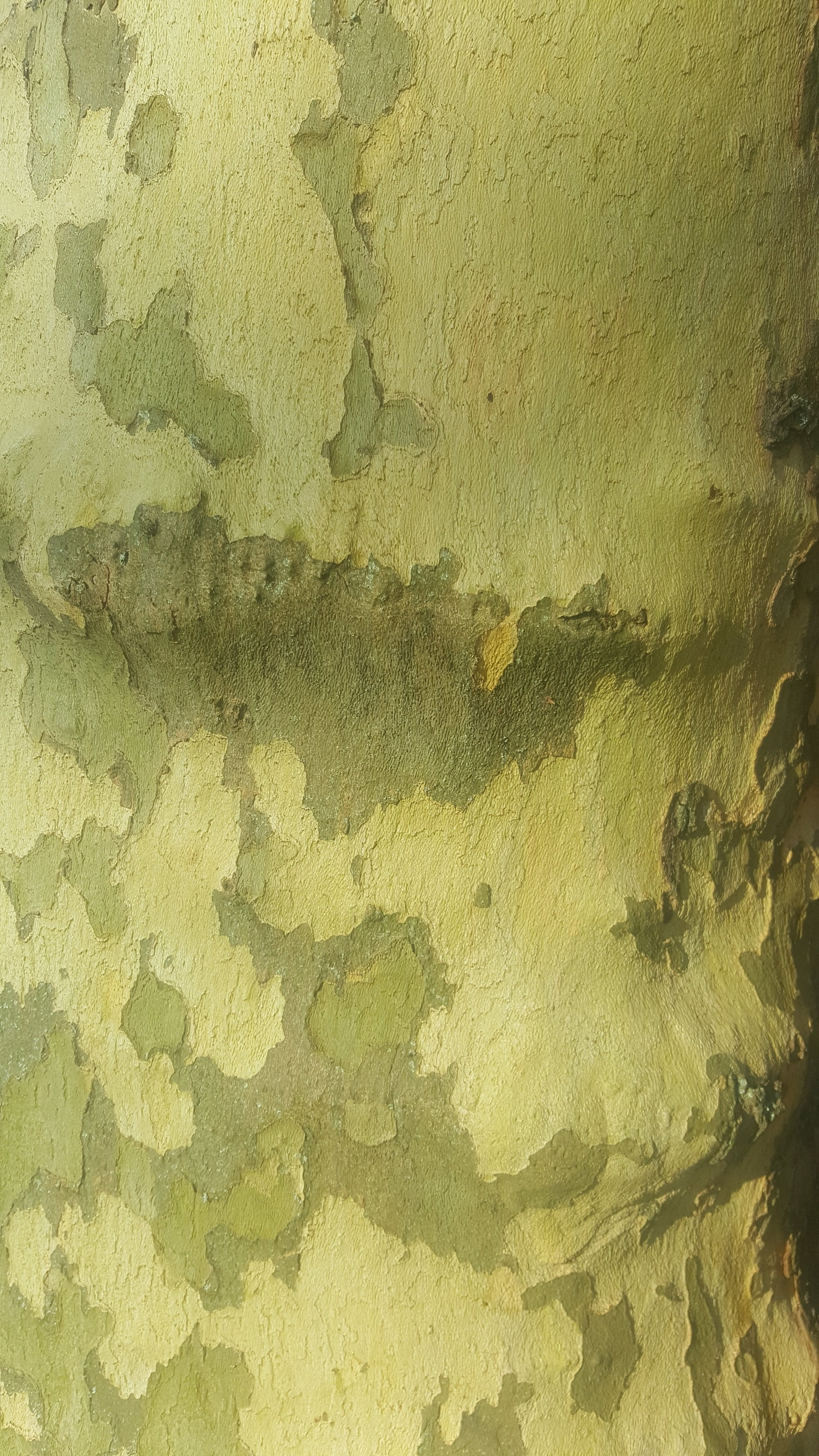'Camo' style bark pattern