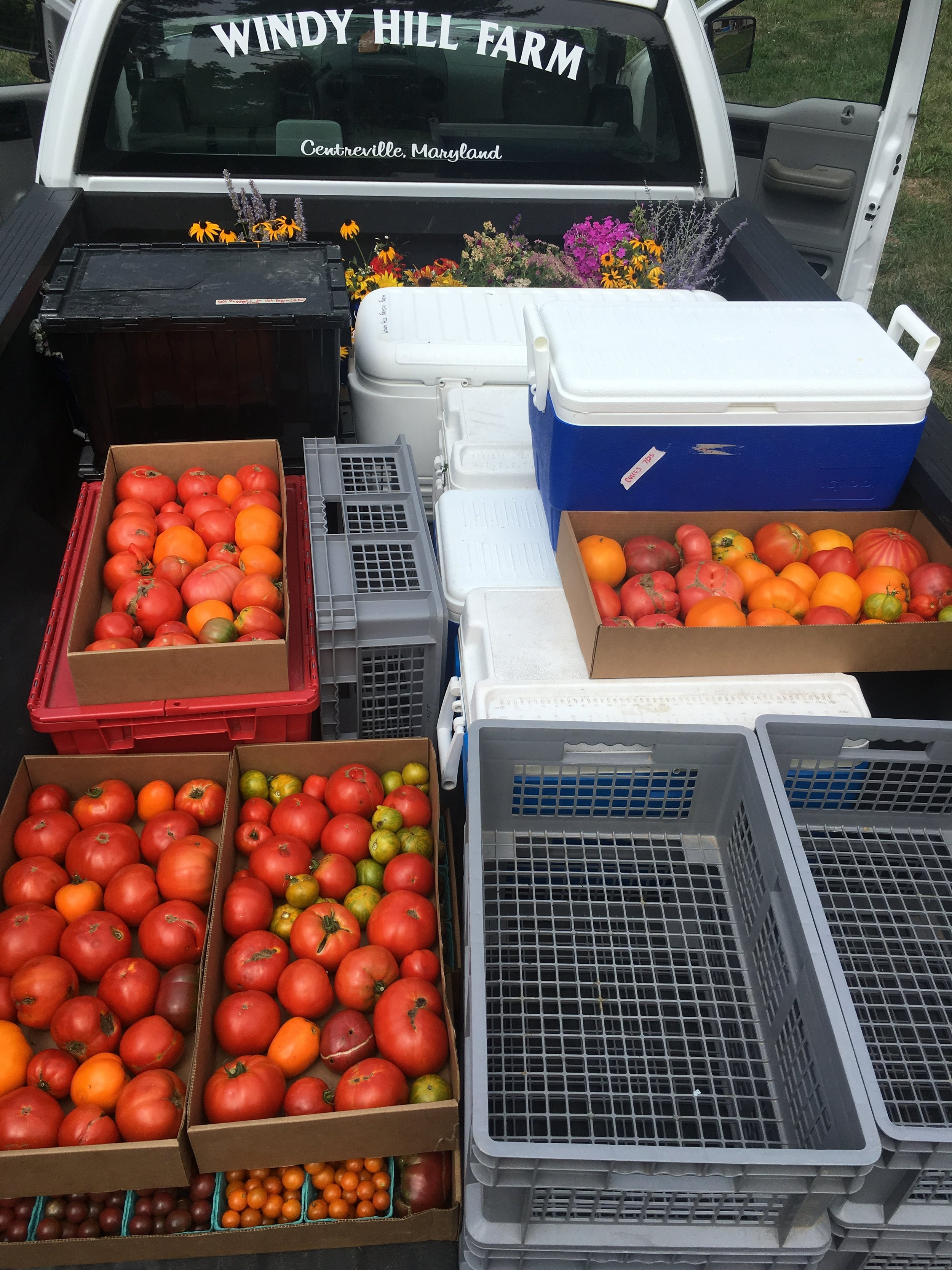 Here's what the farm truck looks like all loaded up for a summer CSA delivery!