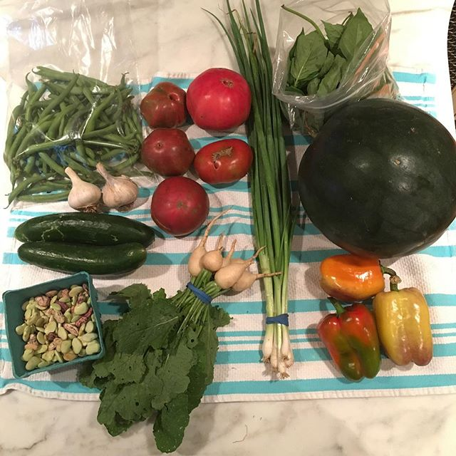 This weeks CSA share had green beans, garlic, cucumbers, butter beans, tomatoes, hakurei turnips, scallions, basil, watermelon and peppers! It's still summer for quite a while as far as our plants are concerned. Yum