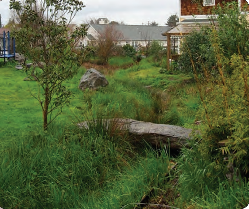 The grasses and plants in this vegetated bioswale intercept runoff and promote groundwater recharge. Photo credit: Sonoma County RCD