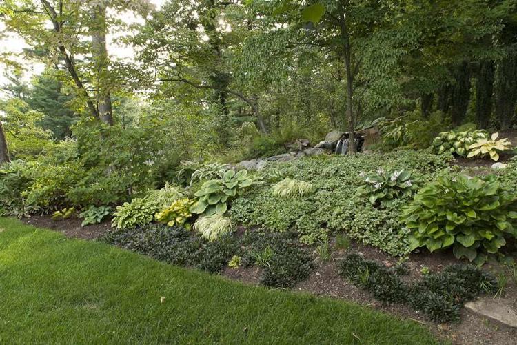 hangbepflanzung-schatten-bodendecker-funkia-japan-berggras.jpeg