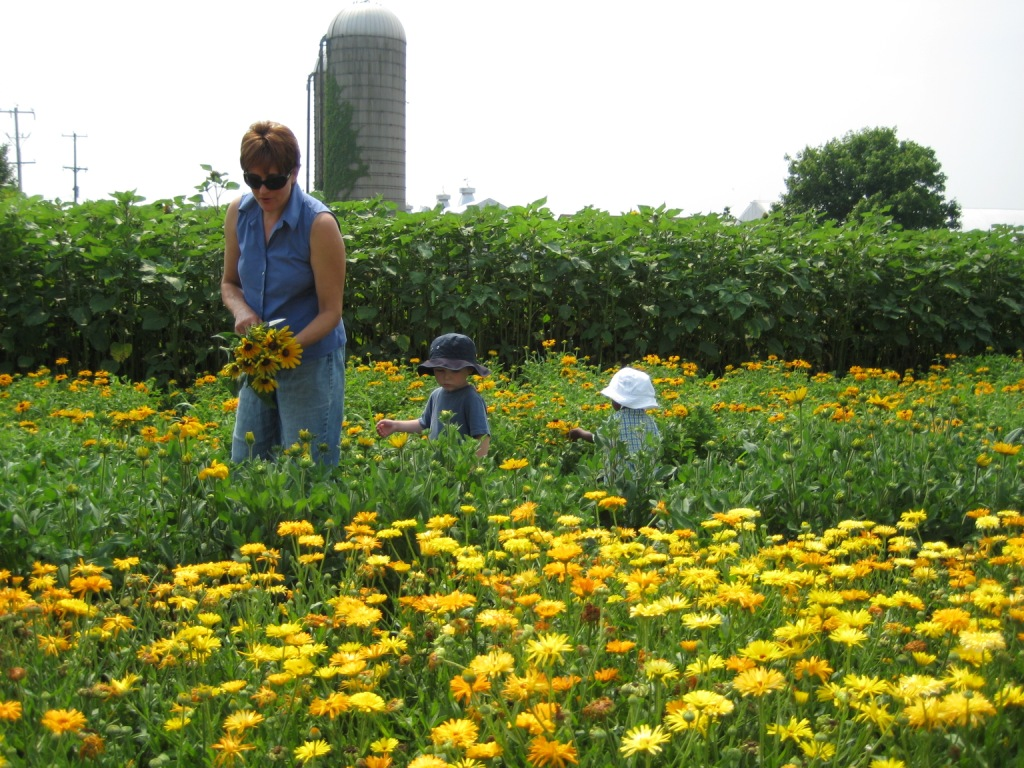 Mother and children picking flowers at the farm