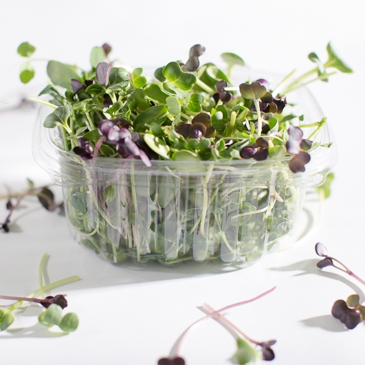 SproutedEarth-Sprouts-050.jpg